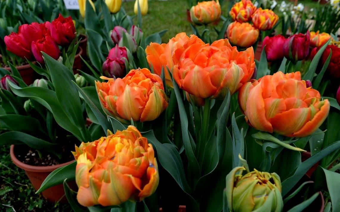 Floribunda. Collezionisti di fiori nel parco 04